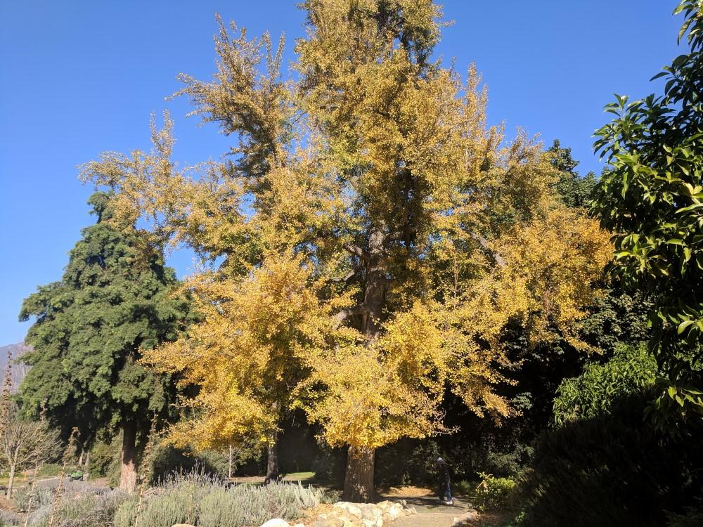 arboretum-fall-16.jpg