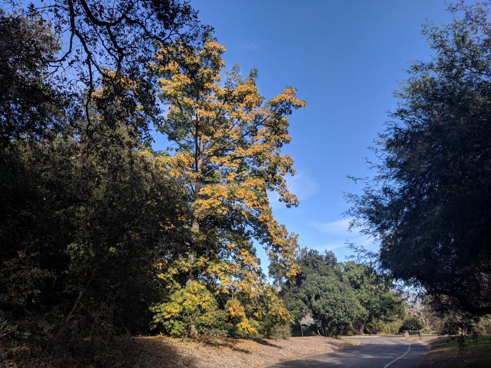 arboretum-fall-17.jpg