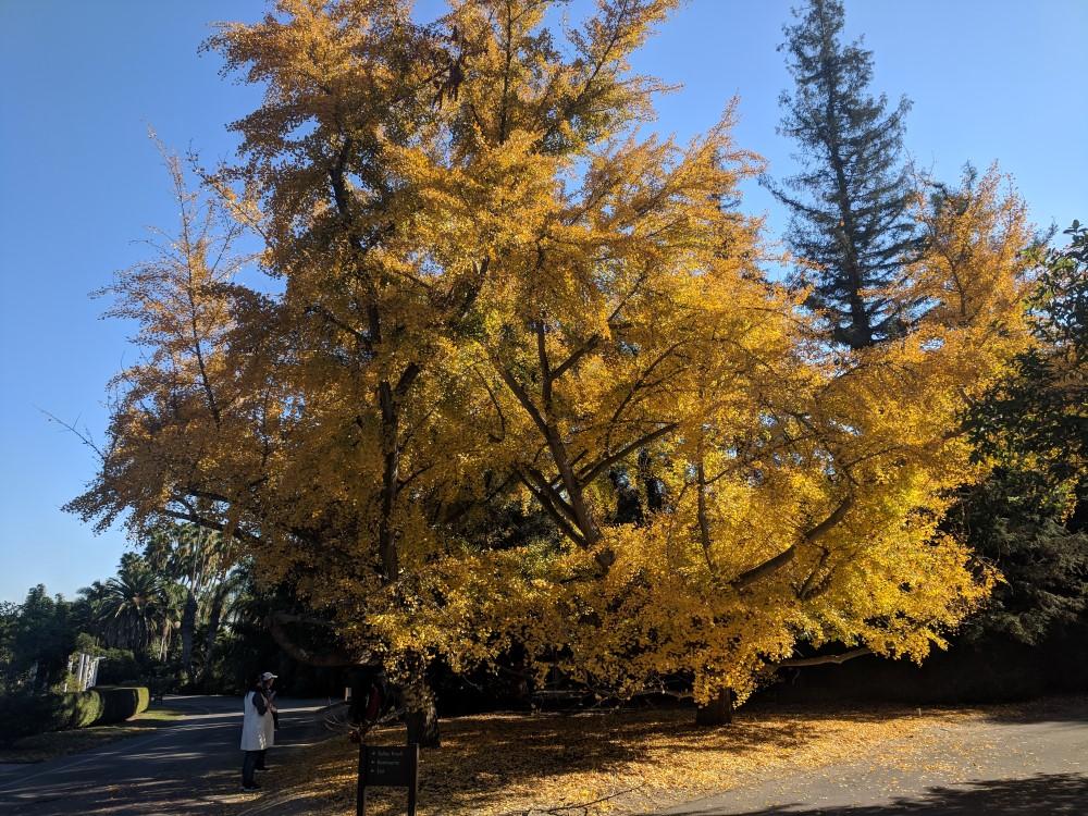 arboretum-fall-19.jpg