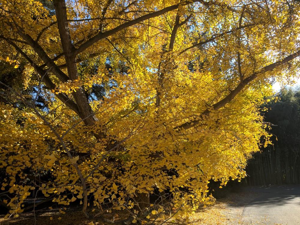 arboretum-fall-20.jpg