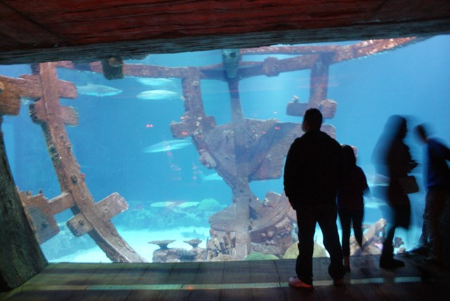 shark-reef-aquarium12.jpg