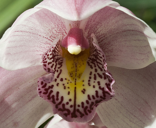 orchid_show.jpg