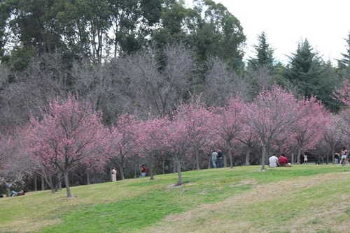 plum-blossom-06.jpg