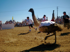 chandler_ostrich_festival.jpg