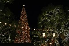 the_grove_christmas_tree_01.JPG
