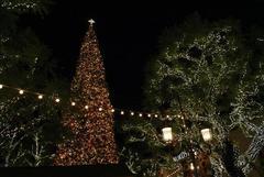 the_grove_christmas_tree_01.JPG