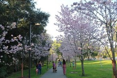 schabarum-park-spring-festival.jpg