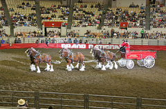 GrandNationalRodeo.jpg