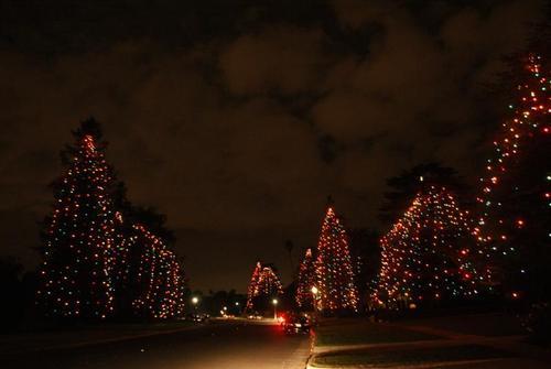 照片 - ȁ�瑪利諾聖誕樹大道(Christmas Tree Lane) - Ǿ�國城鎮旅遊網