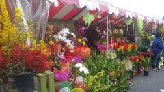 Flower_Festival.jpg