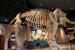 Arizona-Museum-of-Natural-History1.JPG