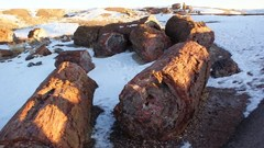 petrified_forest8.JPG