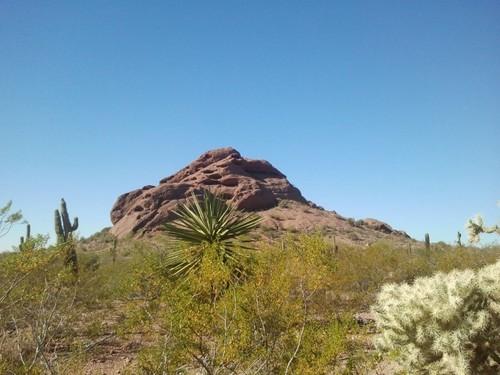 desert-botanical-garden5.jpg