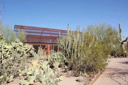 desert-botanical-garden7.JPG