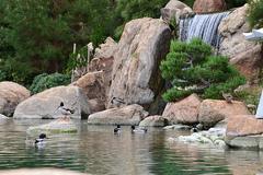 ro_ho_en_japanese_garden.jpg