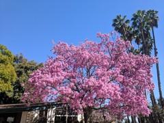 arboretum13.jpg