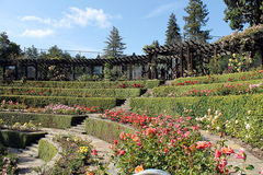 Berkeley-Rose-Garden.jpg