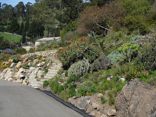UC-Berkeley-Botanical-Garden-01.jpg