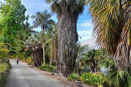 UC-Berkeley-Botanical-Garden-05.jpg