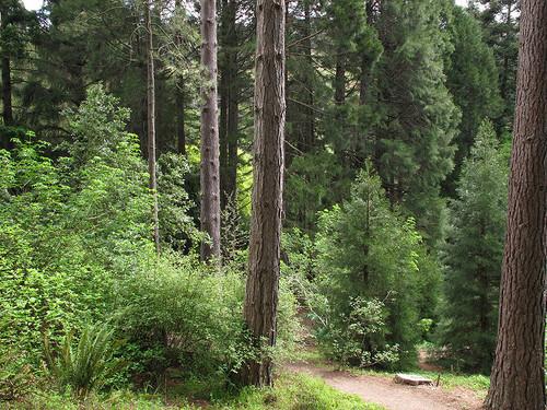 UC-Berkeley-Botanical-Garden-07.jpg