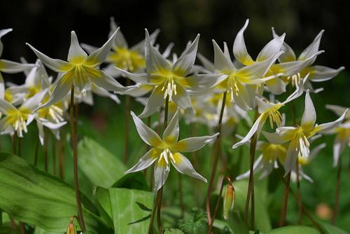 UC-Berkeley-Botanical-Garden-08.jpg