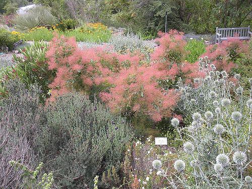 UC-Berkeley-Botanical-Garden-09.jpg