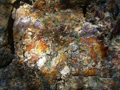 Calistoga-petrified-wood.jpg