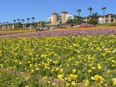 flower_field9.JPG