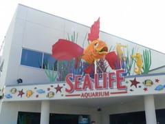 sea_life_aquarium12.jpg