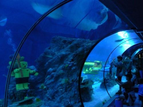 sea_life_aquarium7.jpg