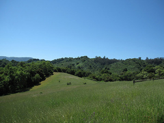 Fremont-Older-Open-Space-Preserve.jpg