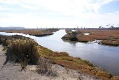 san-elijo-lagoon1.JPG