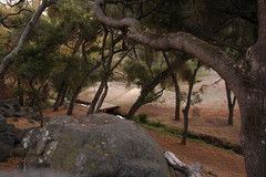 Felicita-County-Park.jpg