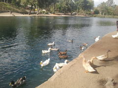 laguna-lake-park1.jpg