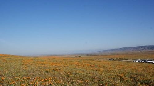 poppy-reserve4.jpg