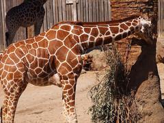 Oakland-Zoo-1.jpg