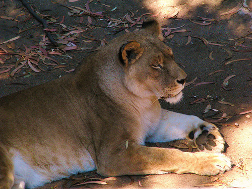Oakland-Zoo-2.jpg