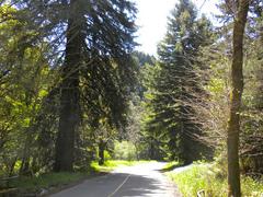 RedwoodRegionalPark.jpg