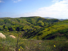 Santiago-Oaks-Regional-Park.jpg