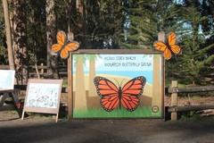 Butterfly-Grove1.JPG