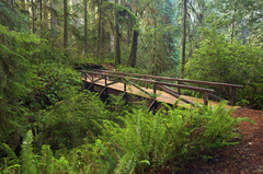 Redwood-National-Park.jpg