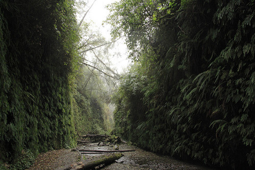 Redwood-National-Park1.jpg