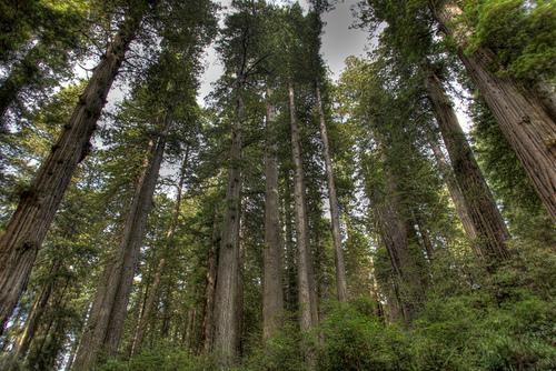 Redwood-National-Park3.jpg