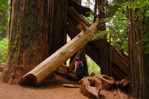Redwood-National-Park5.jpg