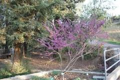 riverside_botanic_garden (1).jpg