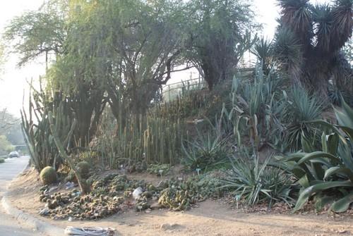 ucr-botanical-garden6.JPG