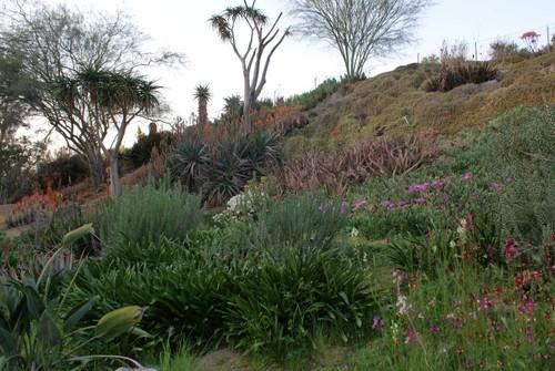 ucr-botanical-garden7.JPG