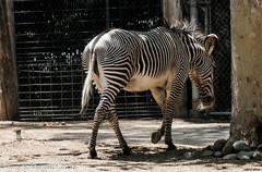 Sacramento-Zoo1.jpg