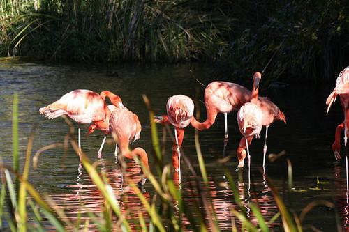 Sacramento-Zoo3.jpg