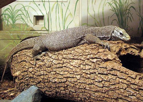 Sacramento-Zoo4.jpg